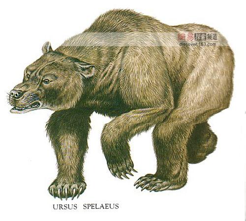 美科学家新发现:史前巨兽洞熊凶猛吃人(图)