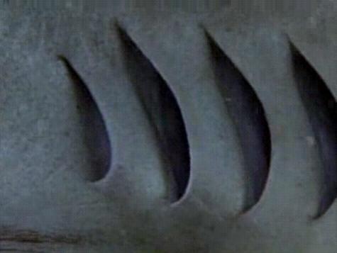 鲨鱼的橡皮泥步骤
