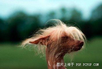 世界上最丑的动物_华商网